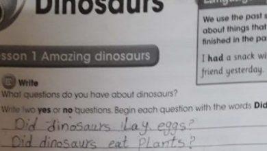 Photo of صف رابع فصل ثاني حلول وحدة الديناصورات لغة إنجليزية