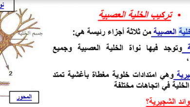 Photo of صف تاسع متقدم فصل ثاني أحياء مراجعة الجهاز العصبي