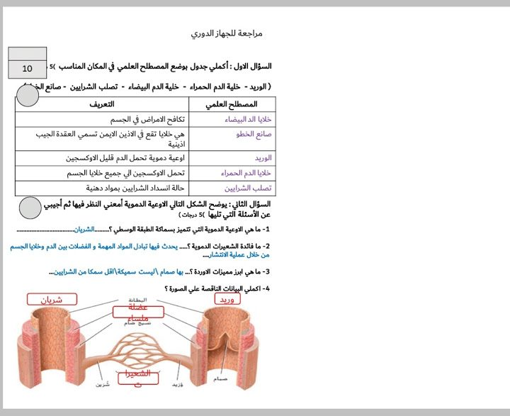 Photo of صف تاسع متقدم فصل ثاني ورقة ملخص الجهاز الدوري أحياء.