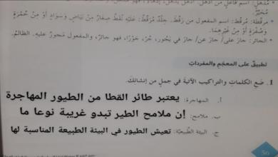 Photo of حل درس طائر القطا للصف السابع لغة عربية