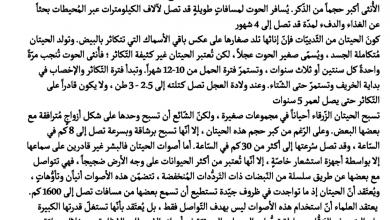 Photo of اختبار تقويم أول لغة عرببة صف ثالث فصل ثاني