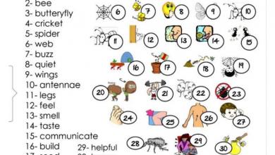 Photo of صف ثالث فصل ثاني لغة إنجليزية مفردات الوحدة السادسة