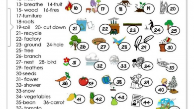 Photo of مفردات الوحدة السابعة لغة إنجليزية صف ثالث فصل ثاني