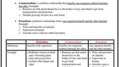 Photo of ورق عمل الدرس الثالث العلاقات في النظم البيئية علوم منهج إنجليزي صف خامس فصل أول