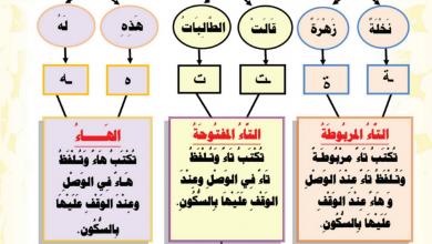 Photo of تدريبات التاء المربوطة والمفتوحة لغة عربية صف ثاني فصل أول