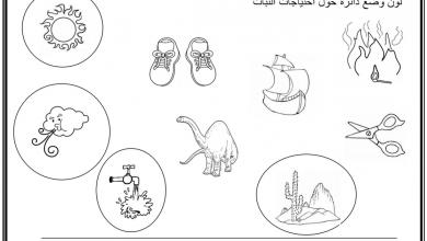 Photo of أوراق عمل درس أجزاء النبات علوم صف أول فصل أول