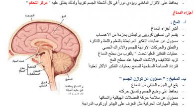 Photo of ملخص درس تنظيم الجهاز العصبي أحياء فصل أول صف ثاني عشر عام