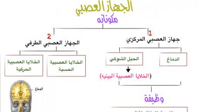 Photo of مكونات الجهاز العصبي أحياء فصل أول صف ثاني عشر