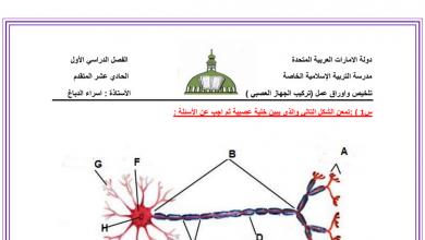 Photo of أوراق عمل تركيب الجهاز العصبي أحياء فصل أول صف ثاني عشر عام