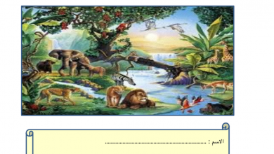 Photo of مراجعة علوم النباتات كائنات حية فصل أول صف أول