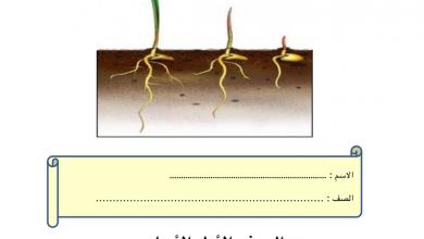 Photo of ملخص الوحدة الثانية النباتات تنمو وتتغير علوم فصل أول صف أول