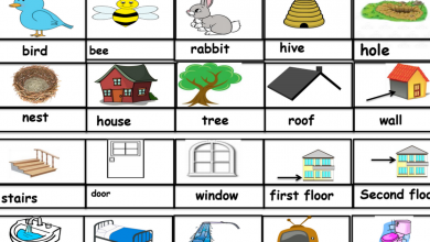Photo of مفردات الوحدة الثامنة لغة انكليزية صف ثالث فصل ثالث