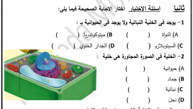 Photo of ورق عمل الخلية علوم صف رابع فصل أول
