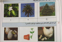 Photo of امتحان وزاري علوم 2019-2020 الصف الثالث الفصل الاول