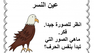 Photo of ملف استراتيجيات مساعدة لتعلم القراءة لغة عربية صف أول