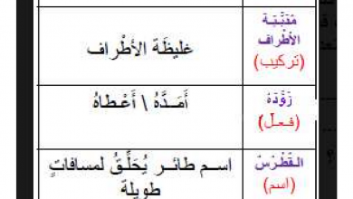 Photo of ورقة عمل عالم الطيران لغة عربية صف ثاني فصل ثاني