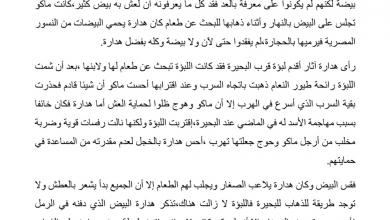 Photo of تلخيص الفصل الثامن عشر هجوم اللبؤة رواية الولد الذي عاش مع النعام صف سابع