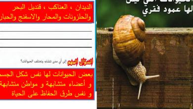 Photo of حل درس الحيوانات التي ليس لها عمود فقري علوم صف رابع فصل أول