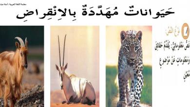 Photo of حل درس حيوانات مهددة بالإنقراض لغة عربية صف رابع فصل أول