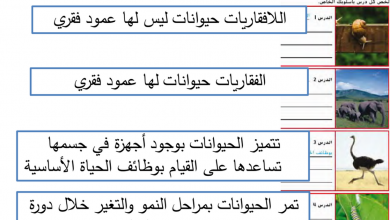 Photo of حل مراجعة وحدة مملكة الحيوان علوم صف رابع فصل أول