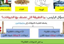 Photo of تلخيص درس مجموعات الحيوانات علوم صف أول فصل أول